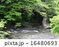 養老川 清流 渓谷の写真 16480693