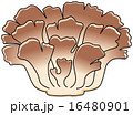 舞茸 ベクター 秋の味覚のイラスト 16480901