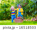 遊ぶ 造園 秋の写真 16518503
