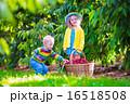 遊ぶ 造園 秋の写真 16518508