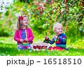 遊ぶ 秋 造園の写真 16518510
