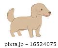 犬イラスト2 16524075