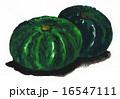 カボチャ 水彩 野菜のイラスト 16547111
