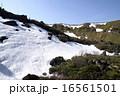 白根山の雪解け 16561501