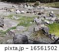 草津温泉 西の河原公園① 16561502