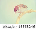 雀 16563246
