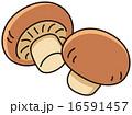 ブラウンマッシュルーム 16591457