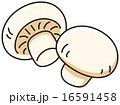 ホワイトマッシュルーム 16591458