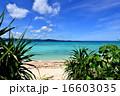 離島 鳩間島 海の写真 16603035