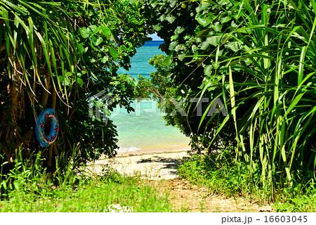 沖縄の離島 鳩間島の風景写真 16603045