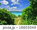 離島 鳩間島 沖縄の写真 16603049