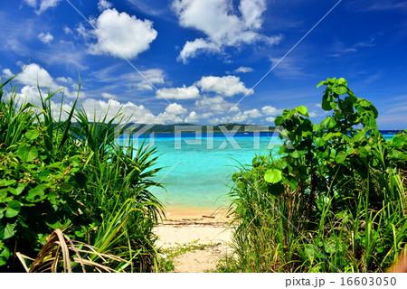 沖縄の離島 鳩間島の風景写真 16603050