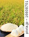 おにぎり 米 稲の写真 16608701