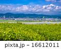 島田市 茶畑 大井川の写真 16612011