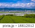 島田市 茶畑 大井川の写真 16612012