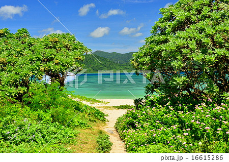 小浜島 細崎ビーチの風景写真 16615286