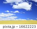 北海道 上富良野町 広大な麦畑と流れ雲 16622223