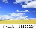 北海道 上富良野町 広大な麦畑と流れ雲 16622224