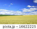 北海道 上富良野町 広大な麦畑と流れ雲 16622225
