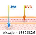 紫外線 UVA UVBのイラスト 16626826