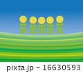 背景 ボーダー 花のイラスト 16630593