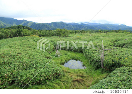 高架木道から眺める知床五湖 16636414