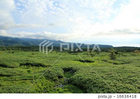 高架木道から眺める知床五湖 16636418