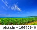 サトウキビ 海 青空の写真 16640940