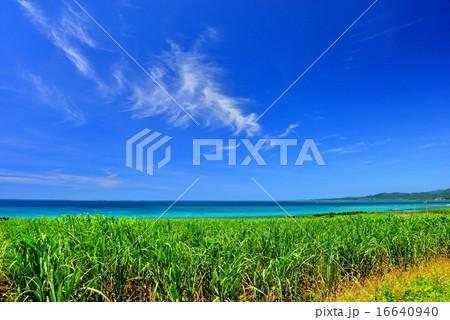 小浜島 サトウキビと海の風景写真 16640940