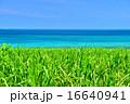 サトウキビ 海 風景の写真 16640941