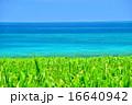 サトウキビ 海 風景の写真 16640942