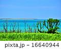 サトウキビ 海 風景の写真 16640944