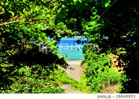 沖縄 小浜島の道がある風景 16640955