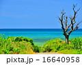 小浜島 海 道の写真 16640958