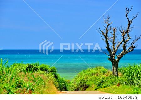 沖縄 小浜島の道がある風景 16640958