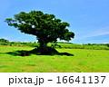 沖縄 離島 小浜島の風景写真 16641137