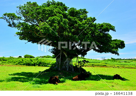 沖縄 離島 小浜島の風景写真 16641138