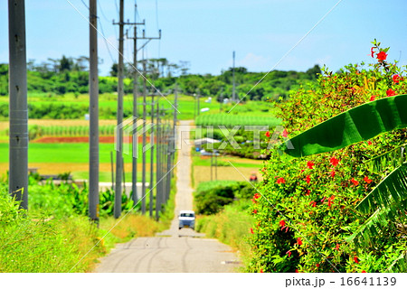 沖縄 離島 小浜島の風景写真 16641139