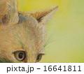 見つめる 哺乳類 動物のイラスト 16641811