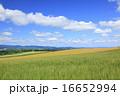 麦畑 畑 雲の写真 16652994