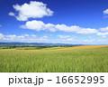 麦畑 畑 雲の写真 16652995