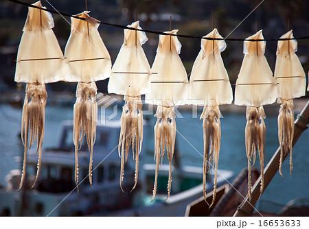 イカの一夜干しの写真素材 [16653633] - PIXTA