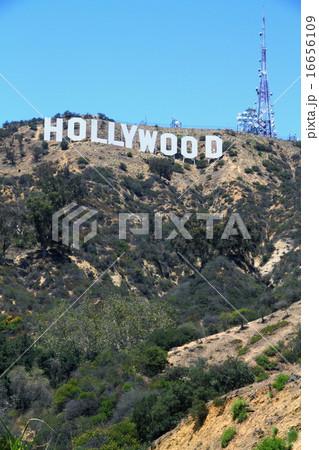 ハリウッド 16656109