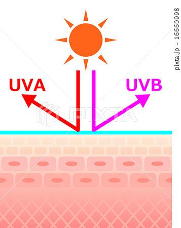紫外線にさらされる肌断面 16660998