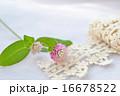 センニチコウの花とトーションレース 16678522