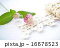 センニチコウの花とトーションレース 16678523