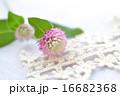 白とピンクのセンニチコウとトーションレース 16682368