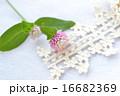 ピンクと白のセンニチコウとトーションレース 16682369
