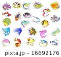 魚 16692176