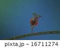 微生物 16711274